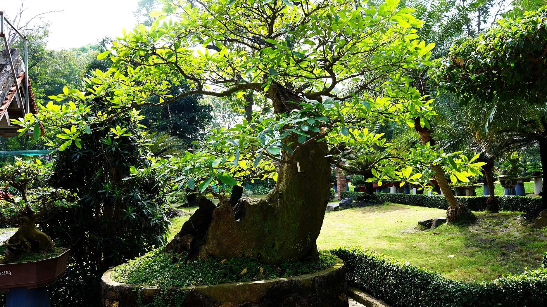 Вьетнам: ботанический сад и зоопарк Хошимина