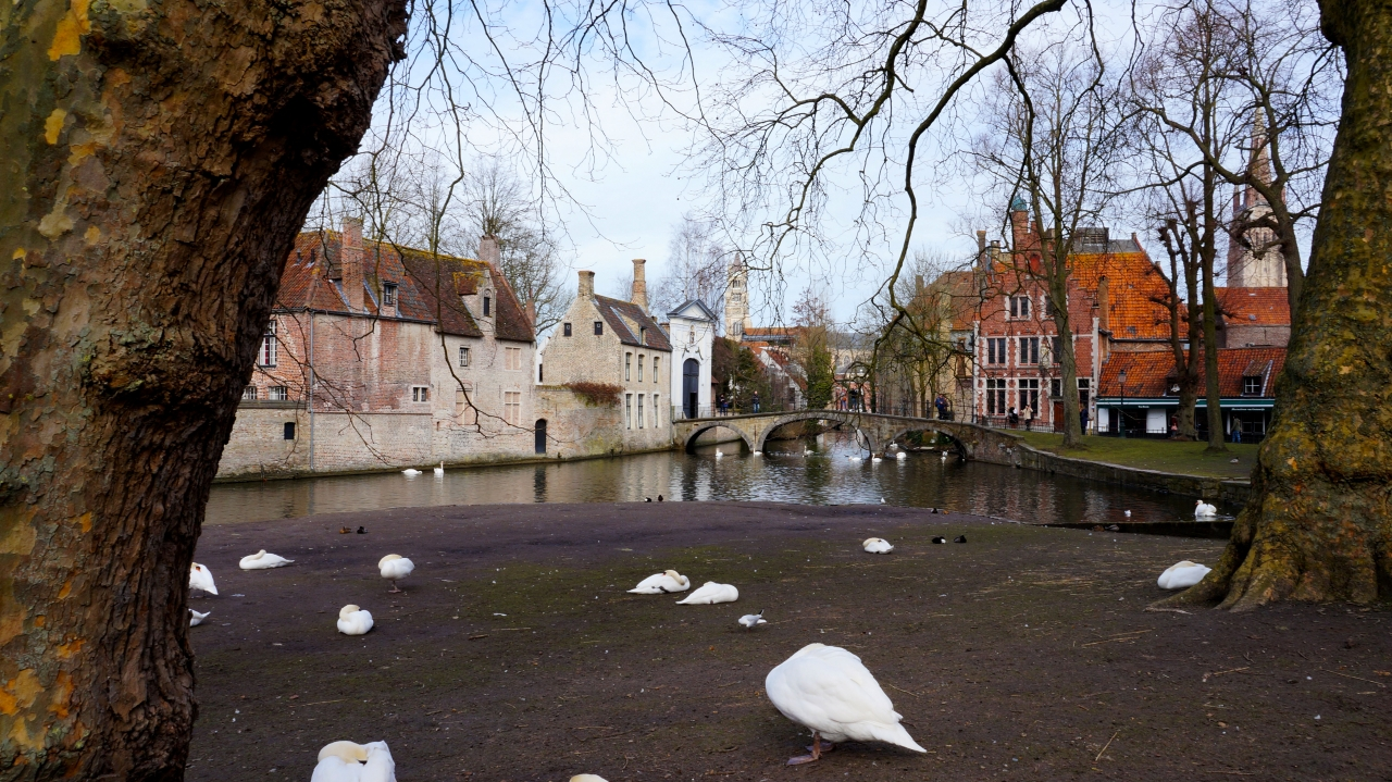 Брюгге, Бельгия: парк с лебедями
