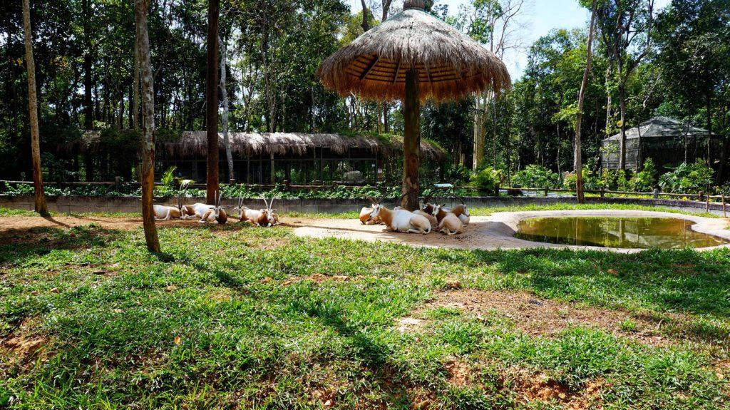 Фукуок: зоопарк Vinpearl