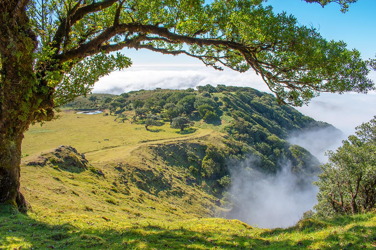 Мадейра, Португалия: Laurisilva of Madeira