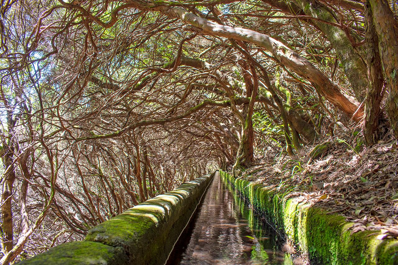 Мадейра, Португалия: левада 25 Fontes