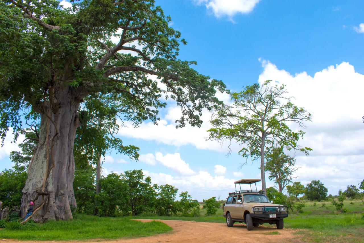 Микуми парк, Танзания Микуми парк Микуми парк, Танзания Mikumi 11