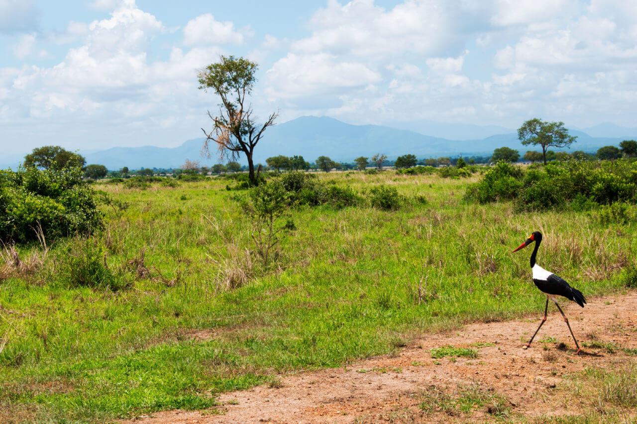 Микуми парк, Танзания Микуми парк Микуми парк, Танзания Mikumi 18