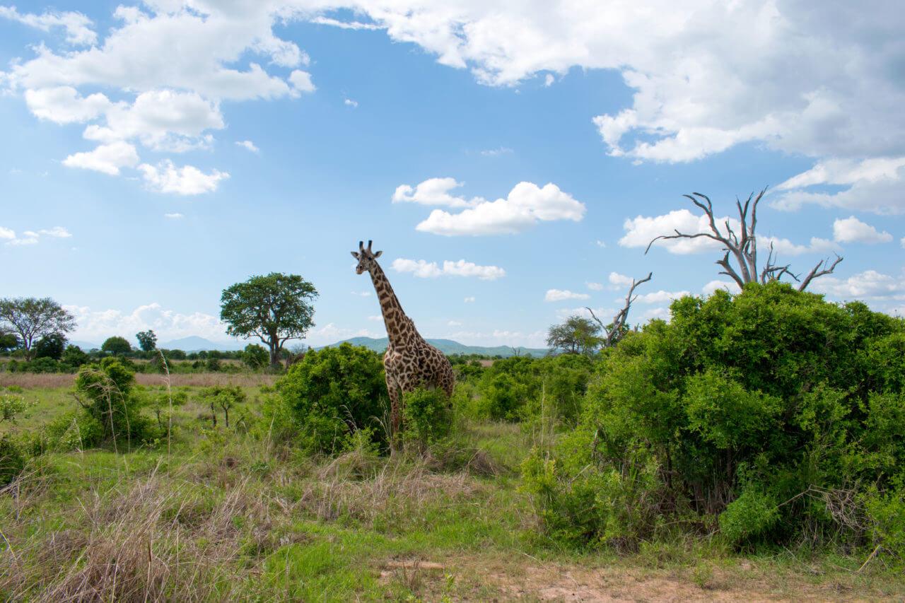Микуми парк, Танзания