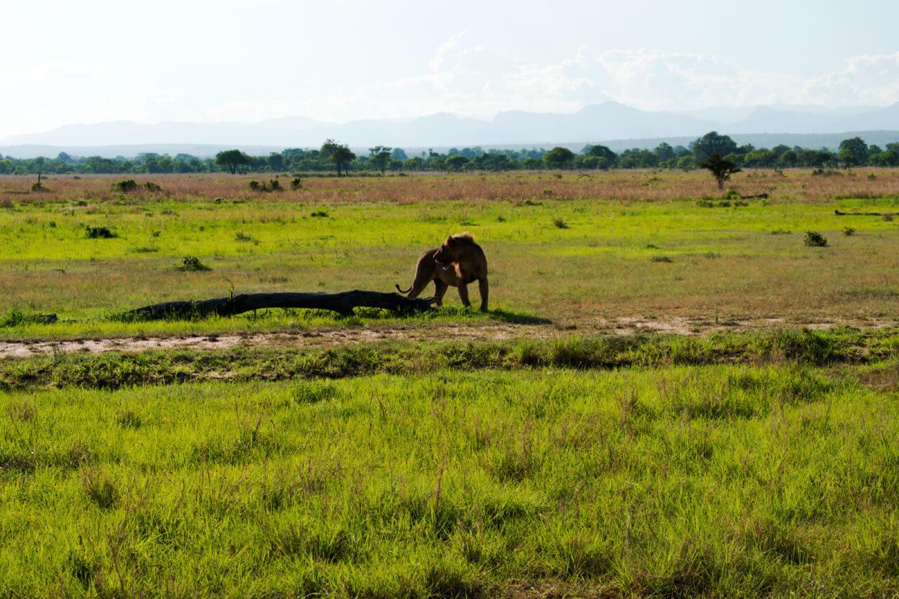 Микуми парк, Танзания Микуми парк Микуми парк, Танзания Mikumi 38
