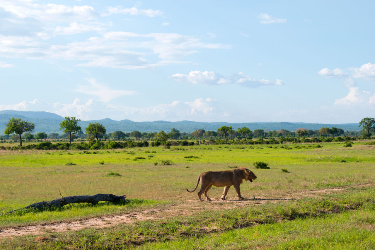 Микуми парк, Танзания Микуми парк Микуми парк, Танзания Mikumi 40