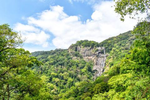Удзунгва — национальный парк, Танзания