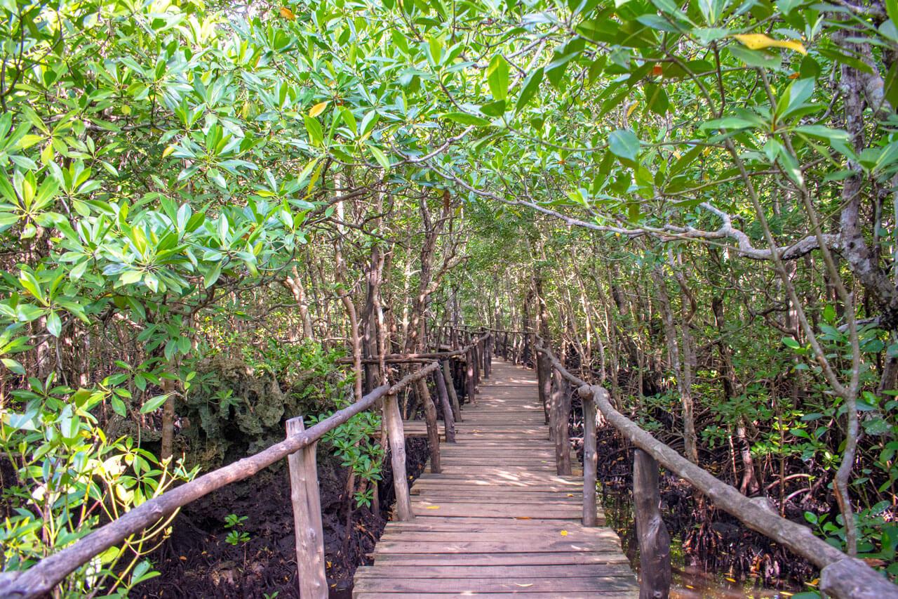 Занзибар, Танзания - парк Jozani Forest  Занзибар, Танзания Zanzibar 104