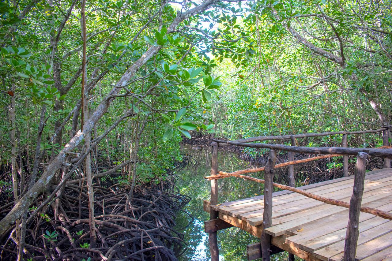 Занзибар, Танзания - парк Jozani Forest  Занзибар, Танзания Zanzibar 105