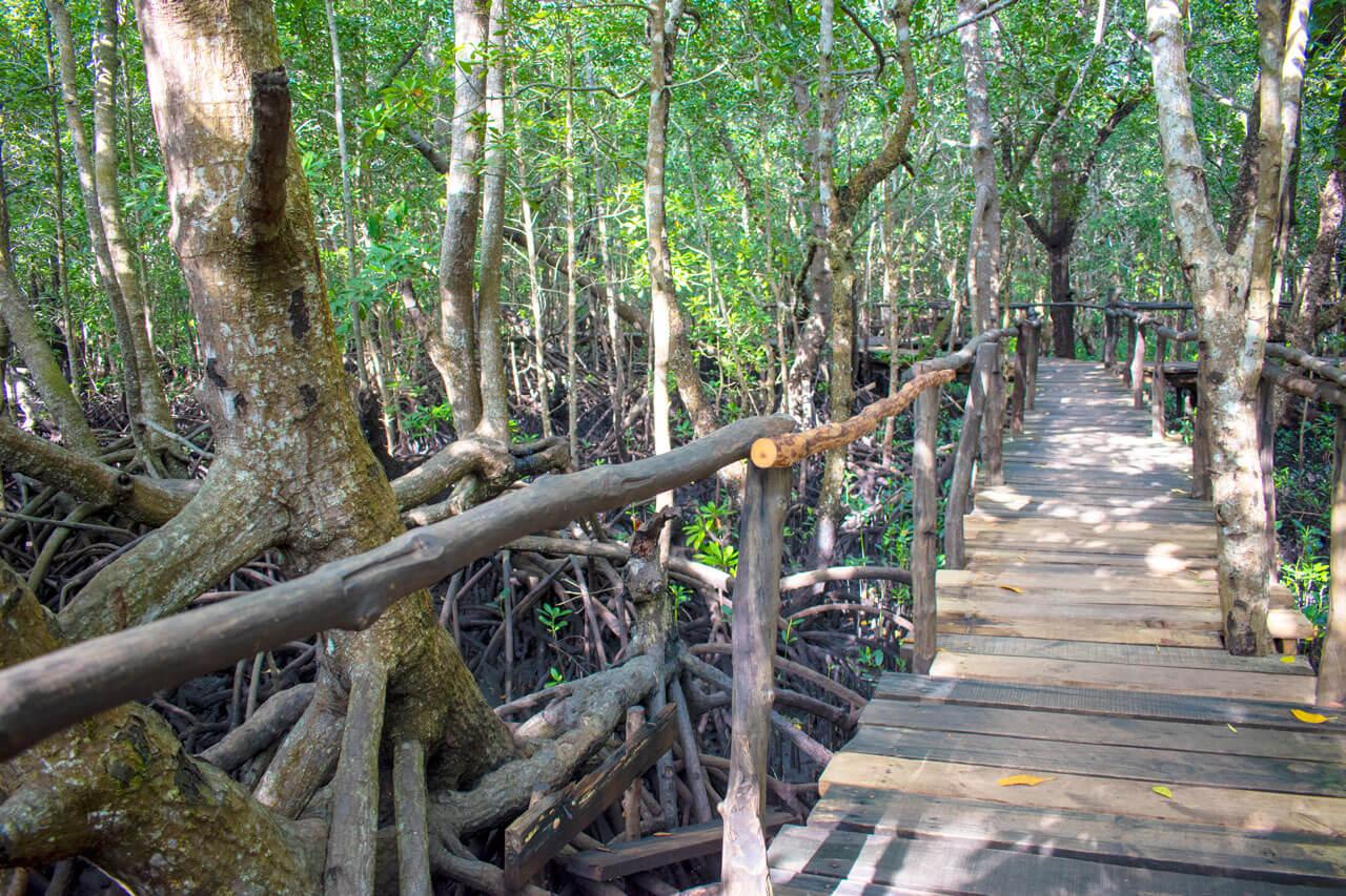 Занзибар, Танзания - парк Jozani Forest  Занзибар, Танзания Zanzibar 106