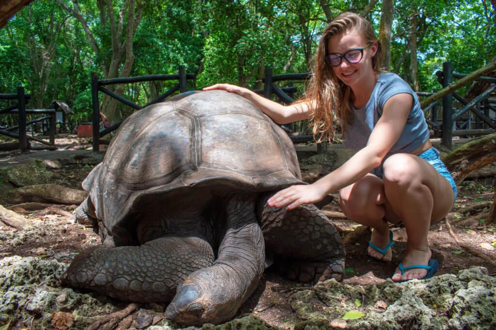 Занзибар, Танзания - Сейшельские черепахи