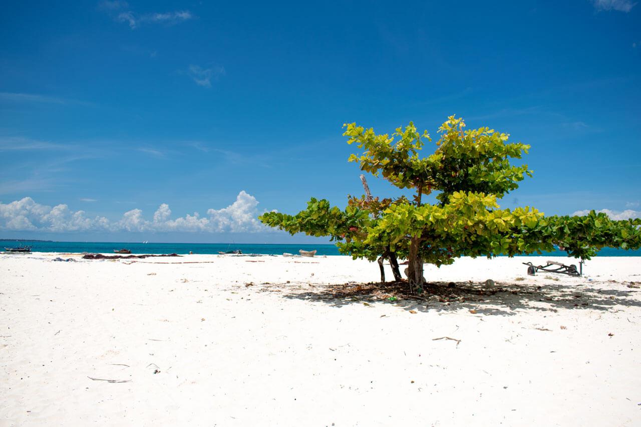 Занзибар, Танзания - пляж Кендва  Занзибар, Танзания Zanzibar 14