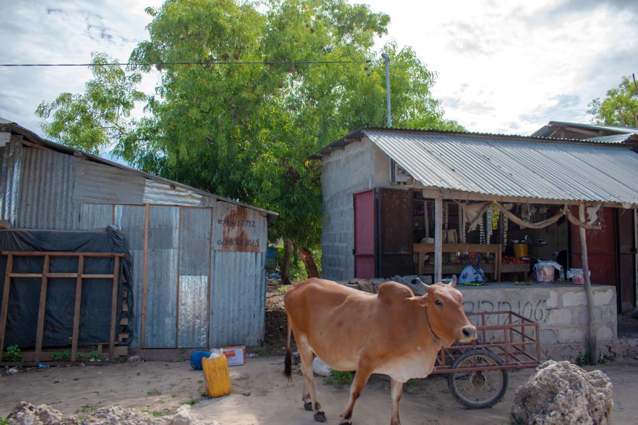 Занзибар, Танзания - деревня Нунгви  Занзибар, Танзания Zanzibar 56