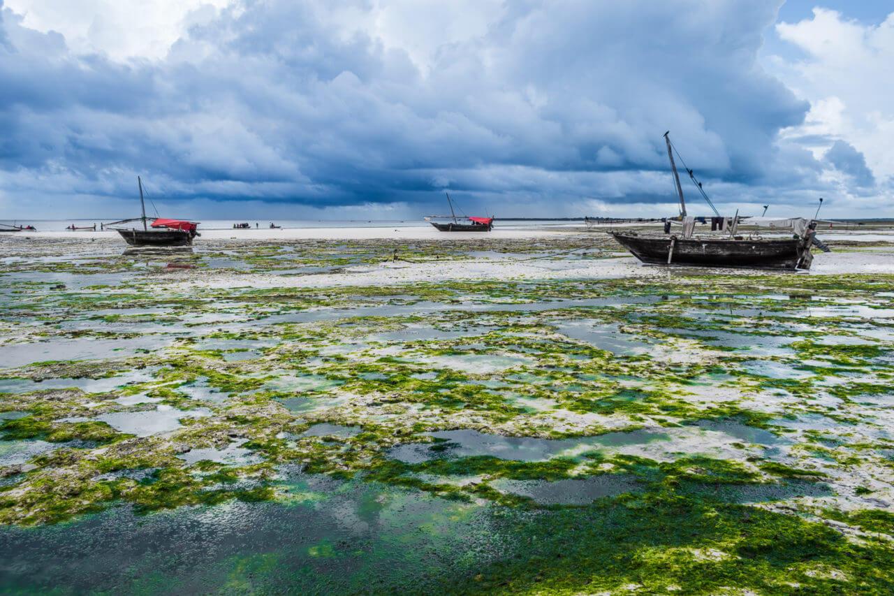 Занзибар, Танзания - пляж Кизимкази  Занзибар, Танзания Zanzibar 80