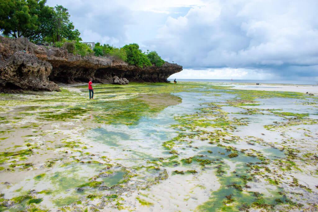 Занзибар, Танзания - пляж Кизимкази