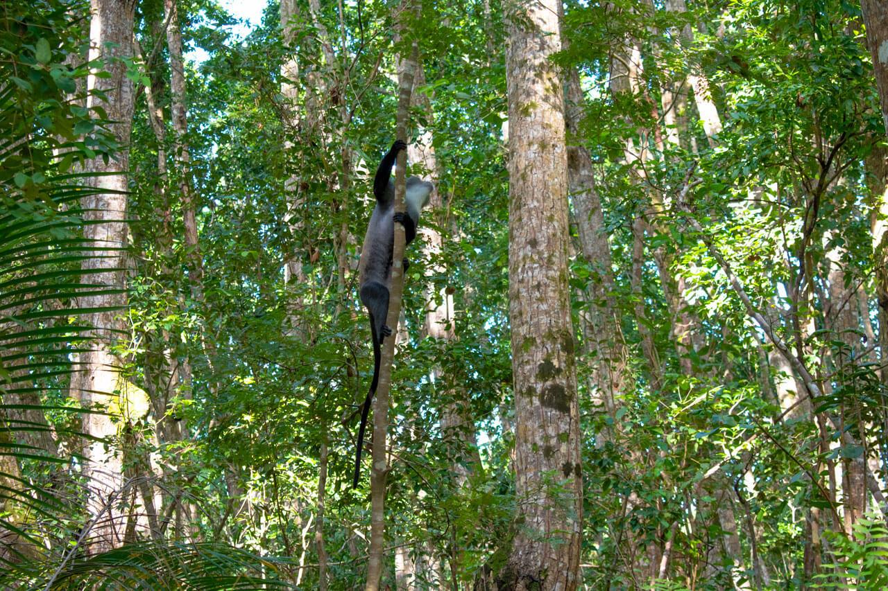 Занзибар, Танзания - парк Jozani Forest  Занзибар, Танзания Zanzibar 95