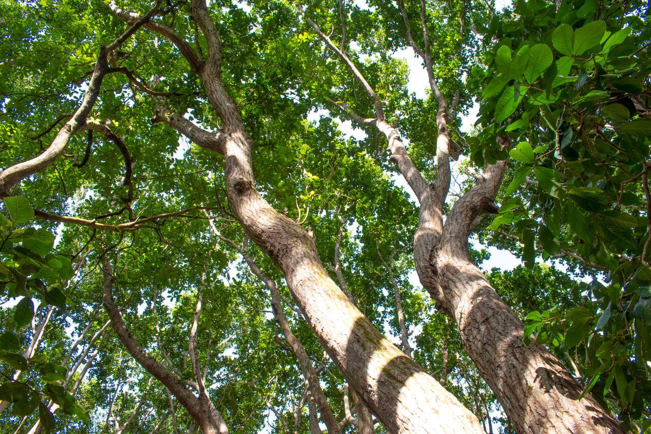 Занзибар, Танзания - парк Jozani Forest  Занзибар, Танзания Zanzibar 97