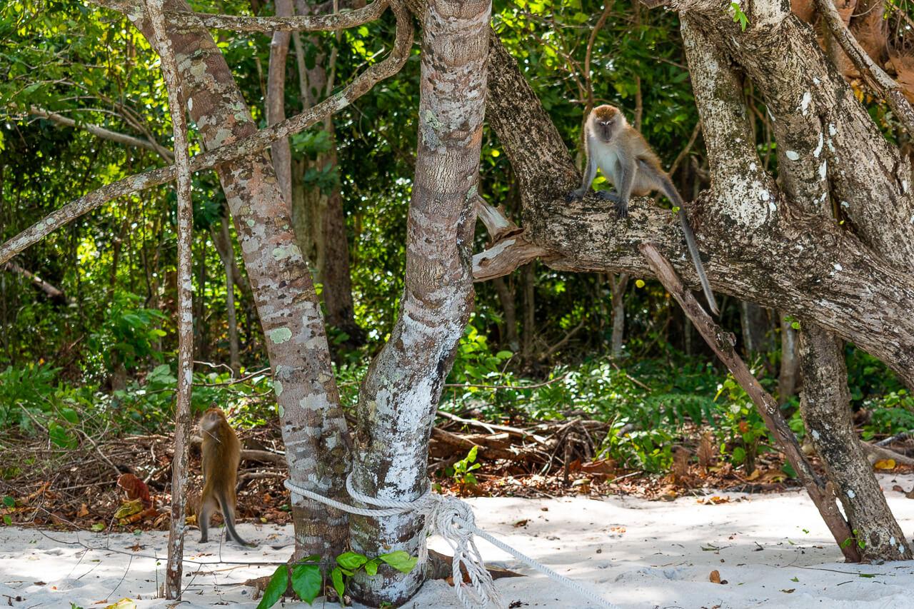 Ко Липе, Таиланд: экскурсия к острову Koh Tong