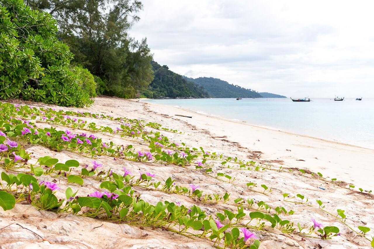 Ко Липе, Таиланд: экскурсия к острову Koh Adang