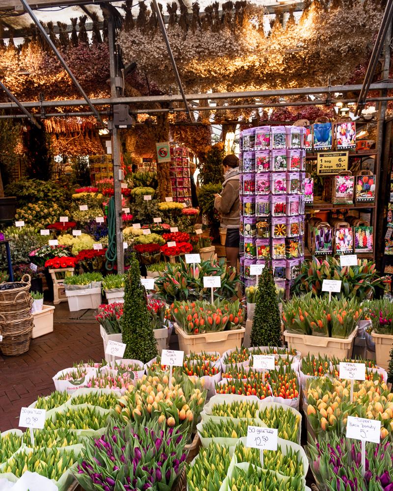 Амстердам за 2 дня: цветочный рынок